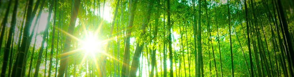 Croître en harmonie avec son environnement...